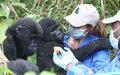 La MONUC évacue des gorilles orphelins dans un sanctuaire plus sur à l'est de la RDC